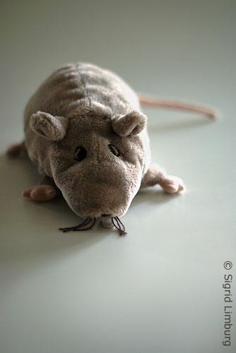 Jahr der Ratte