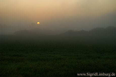 Foto Sonnenaufgang im Nebel Niederrhein