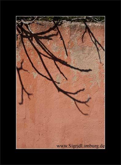 Fotografie Schatten von Zweigen auf einer Mauer