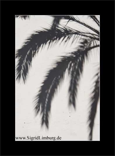 Fotografie Schatten einer Palme auf einer Hauswand