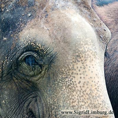 Fotografie Foto Elefant Zoo Tierpark