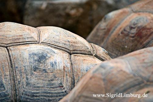 Foto Fotografie Schildkröten