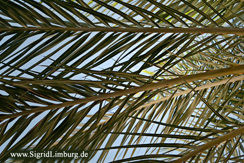 Foto Fotografie Palme Palmblätter