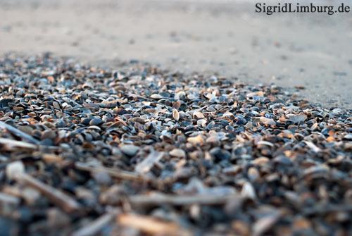 Foto Fotografie Muscheln am Strand