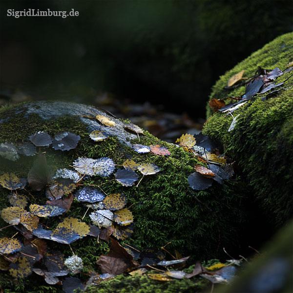 Fotografie Novemberglitzer im Wald © Sigrid Limburg