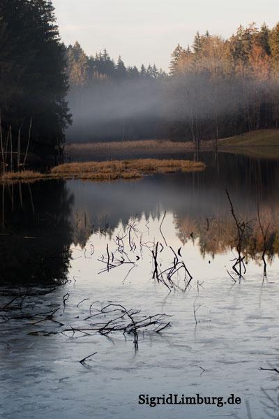 Fotografie Nebel am See © Sigrid Limburg