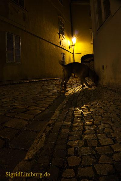 Fotografie Gasse in Prag bei Nacht © Sigrid Limburg