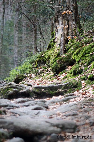 Fotografie Baumstamm,  Felsen und Moos im Wald © Sigrid Limburg